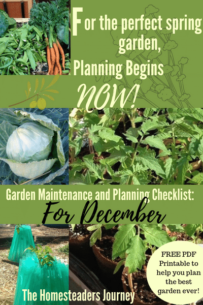Plan your best garden ever in December