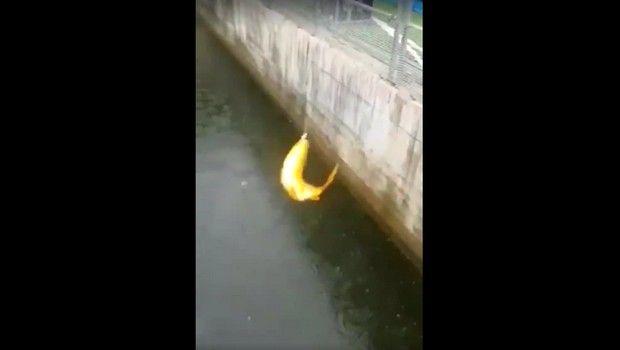 Ασύλληπτο: Οπαδοί έριξαν καλάμι και έπιασαν ψάρι στην τάφρο!