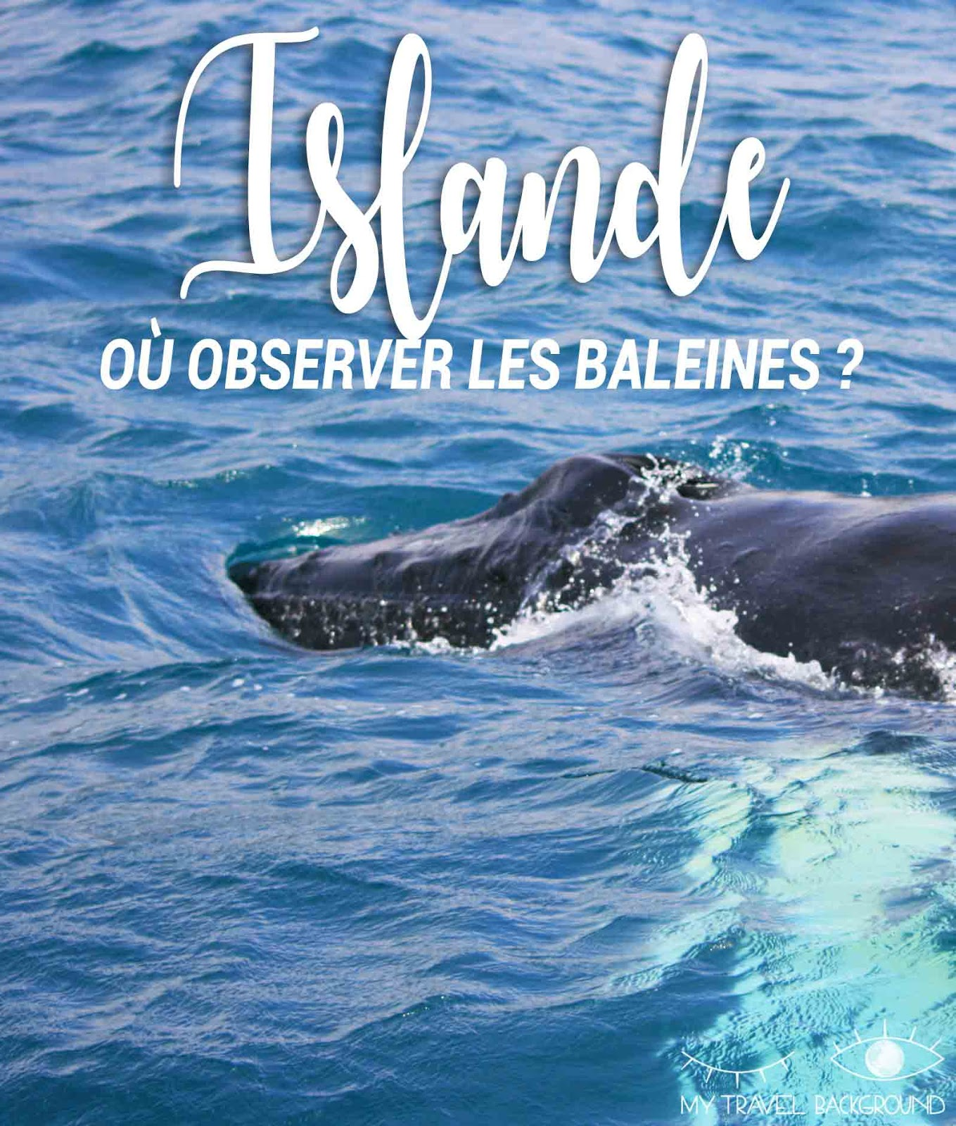 My Travel Background : Où observer les baleines en Islande?