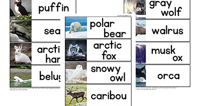 The Arctic Extinction Game: brought to you by President Trump and oil/gas drilling.