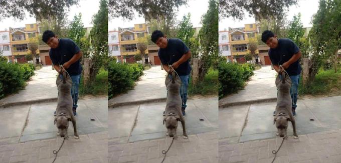 Chiclayo: Sujeto le amarra las patas a su perra para luego colgarla e inseminarla  FOTOS