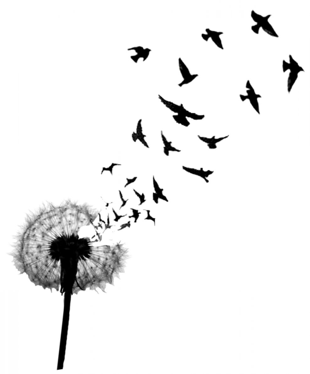 Flying Bird Drawing Tattoo Pack Wallpapers