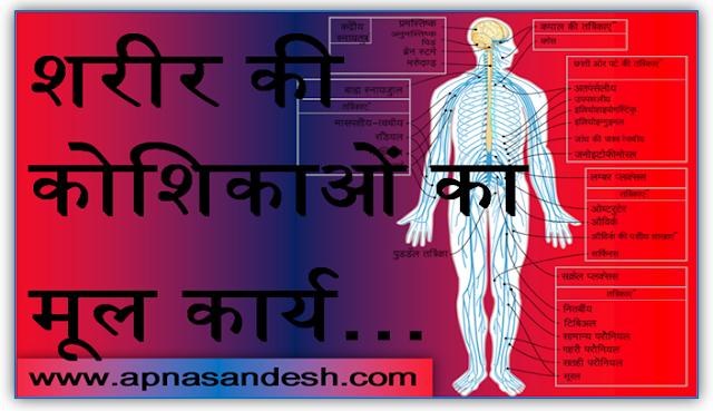 शरीर की कोशिकाओं का मूल कार्य - The basic function of body cells