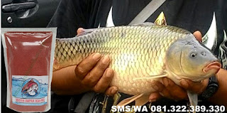 Umpan Pelet Serbuk Paling Cocok Untuk Ikan Mas