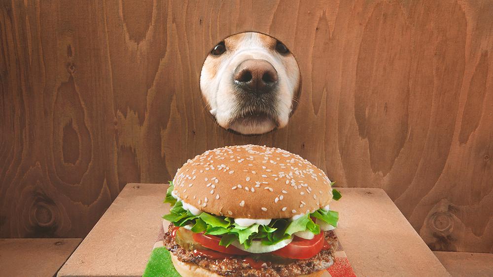 Der Burger King WHOPPER® Dog |  Kann man einen Hund trainieren Whopper aufzuspüren?
