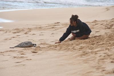 Papailoa Beach Haleiwa