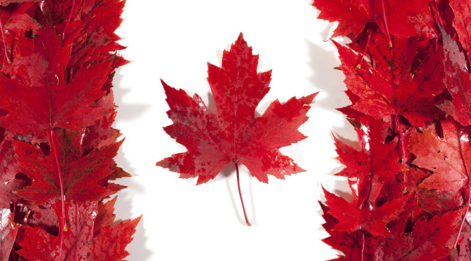 Lá phong đỏ – Biểu tượng đặc trưng văn hóa Canada