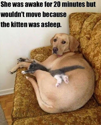 Dog Humor ; No problem i was awake anyways