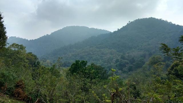 Wild Canopy Reserve