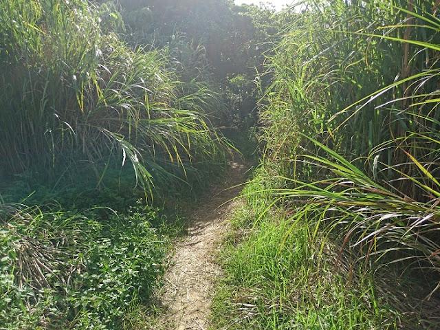 シムクガマの森の入口の写真