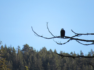 Lassen Volcanic National Park California birding