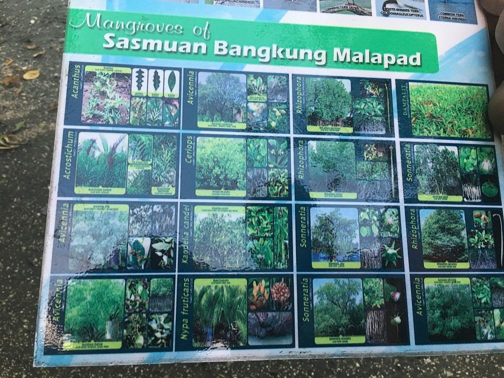 Bangkung Mapalad in Sesmuan Lubao Pampanga