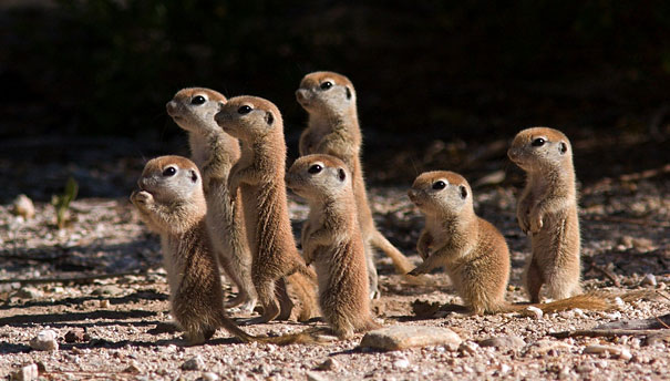 Baby Animals: Baby Prairie Dogs