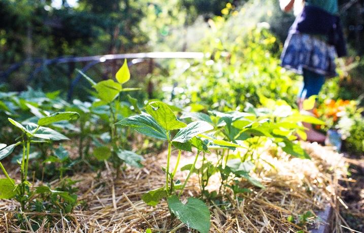 Little City Farm: Organic Gardening Course at Little City Farm - 6 ...