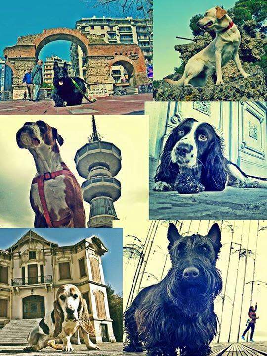 φωτογραφίες έκθεση City of dog
