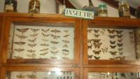 museo zoologia unas