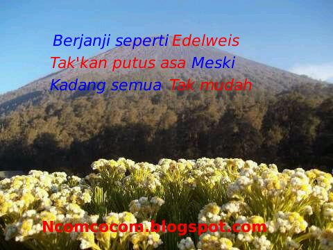 Kata Kata Romantis Bunga Edelweis Nusagates