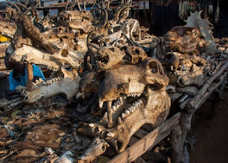 Investigasi Dunia Perdukunan Voodoo di Negara Togo