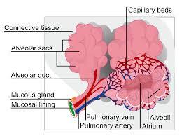 Sistem Ekskresi Hati Pada Manusia dan Macam Penyakitnya [Lengkap]
