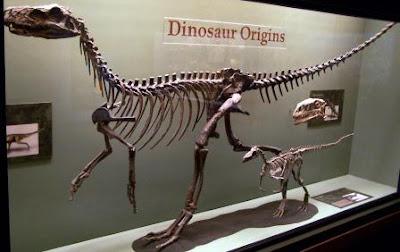 Pembagian Zaman Paleozoikum  Pembagian Zaman Paleozoikum