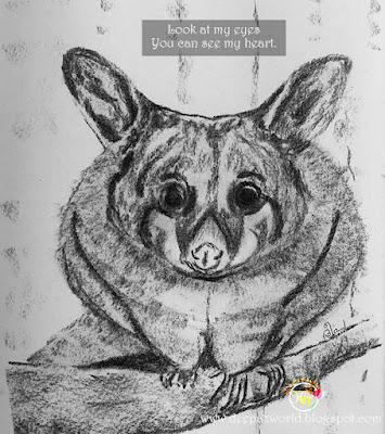 Possum-Fonda'sAnimalPhotoChallenge-HuesnShades
