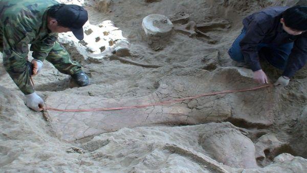 Hallan nueva especie más antigua de dinosaurios en China
