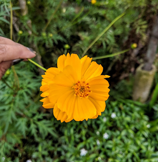 Sourajit Saha Photography 1