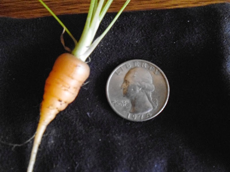 Carrot and Quarter