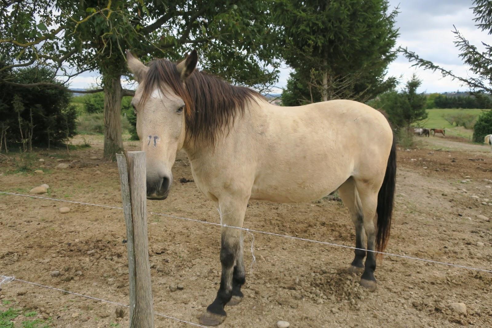 chevaux automne