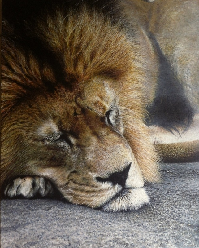 04-Sleeping-Lion-Nick-Sider-Realistic-Animal-Paintings-more-than-a-Photo-Image-www-designstack-co
