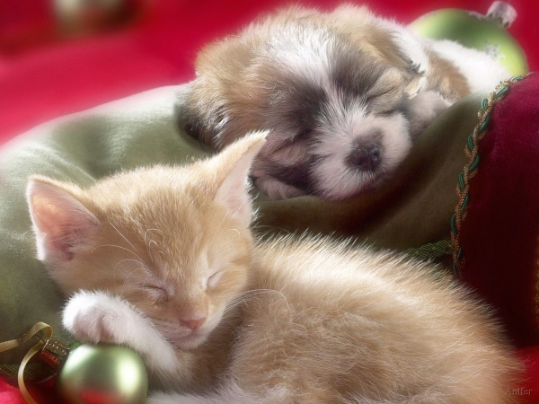 Cute Puppies And Kittens Wallpaper: Animals-Funny-Wallpapers: Cute Kittens And