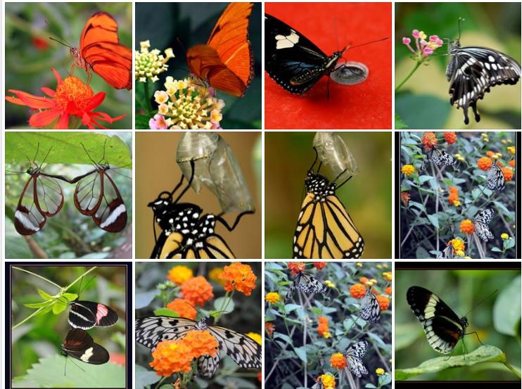 chimay, be, virelles ,LA GRANGE AUX PAPILLONS, CHIMAY, Hainaut, vlinders, virelles, Lepidoptera, Schmetterlingen, butterflies, schubvleugeligenn