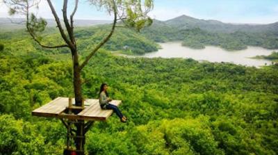 Hutan Wisata Kalibiru,wisata kali buru wisata yang tidak boleh sobat lewat kan saat berada di jogja