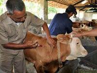 Ayo Belajar Cara Menyuntik Ternak dan Manusia, Ini Teorinya!