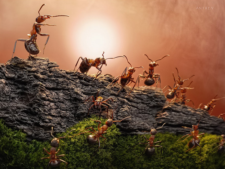 19-The-Great-Wall-and-It-s-Heroes-Andrey-Pavlov-Photographs-of-Ants-an-Affordable-Journey-to-a-Parallel-World
