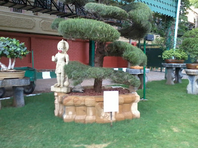 Bonsai Trees - Datta Peetham - Mysore