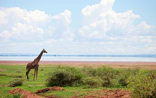 Visit some of Tanzania's lesser known national parks