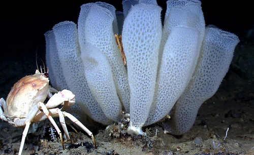 Pengertian Hewan Invertebrata Dan Contohnya Beserta Klasifikasinya