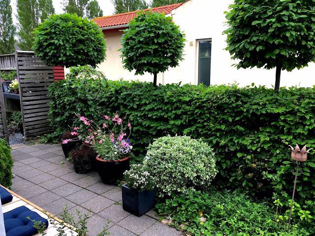 Inngangsparti fra en hage i Trädgårdsrundorna