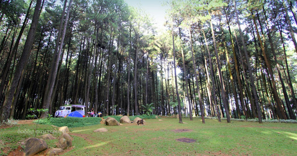 Berkemah di antara pepohonan pinus di Gunung Pancar Bogor