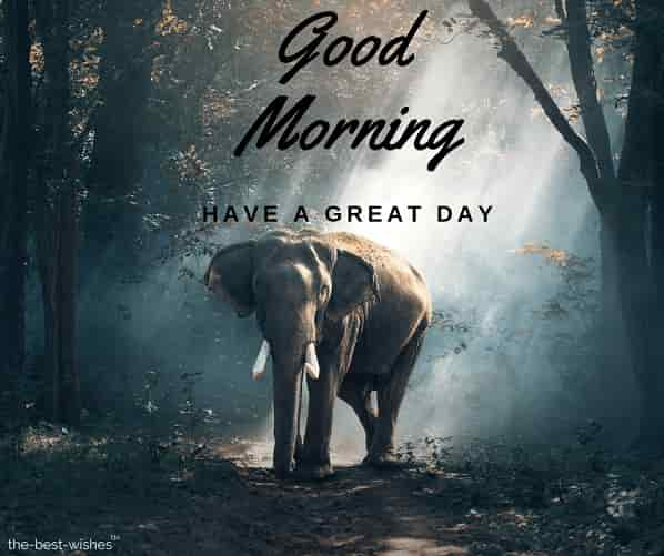 good morning nature with elephant animals asia large
