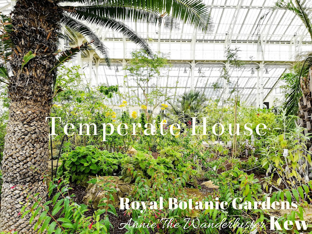 KEW Gardens 邱園 Temperate house