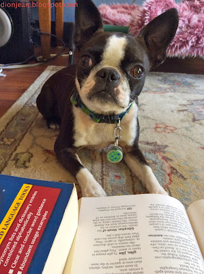 Small Boston terrier and book