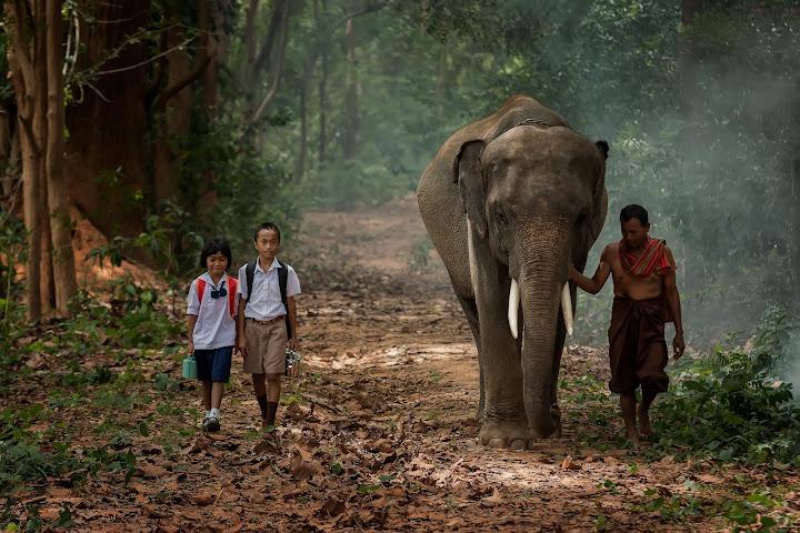 Эти поразительные таиландцы — Райнер Крак — Thai Notes