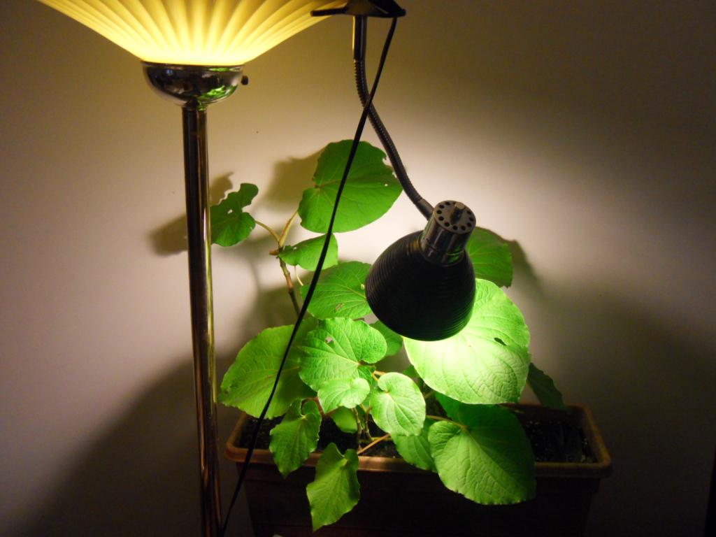 World Seed Supply S And Simple Lighting Options For Indoor Plants