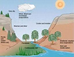 25+ Contoh Ekosistem Darat, Air, Alami dan Buatan