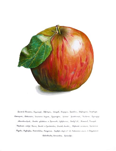 """Le dessin d'une pomme sur papier blanc . En dessous une liste de produits phytosanitaires commençant par """"Ceci est""""."""