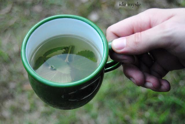 ziołowa herbatka, poziomka pospolita, fragaria vesca, wild strawberry leaf recipe