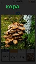 стоит дерево с корой на которой растут грибы
