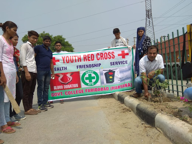 Nehru College students launch tree planted green fodder campaign
